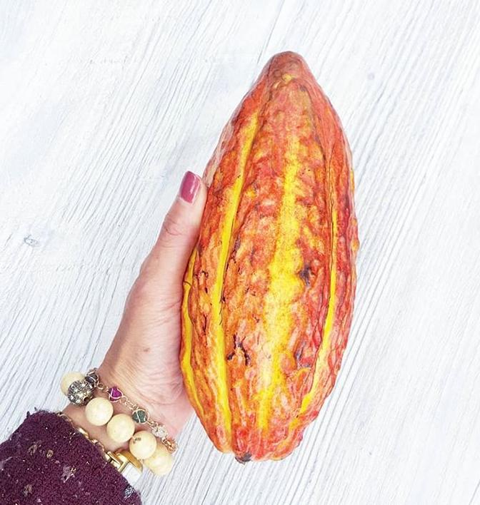 ecuador cacao pod