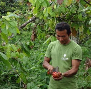 About to sample fresh cacao in Ecuador